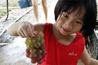 圣元家人摘到葡萄后的喜悦