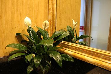 圣元电器绿植开花了