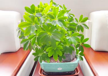 圣元电器VIP贵宾室的新绿植