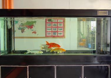 圣元电器接待室-鱼缸